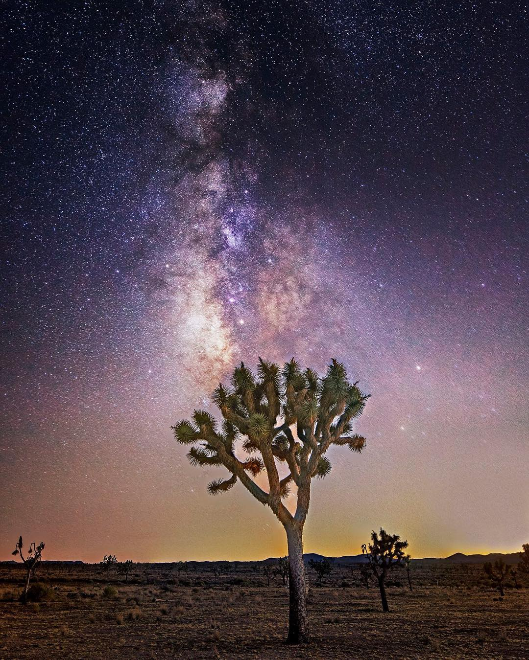 Chris Schwarz in Joshua Tree...