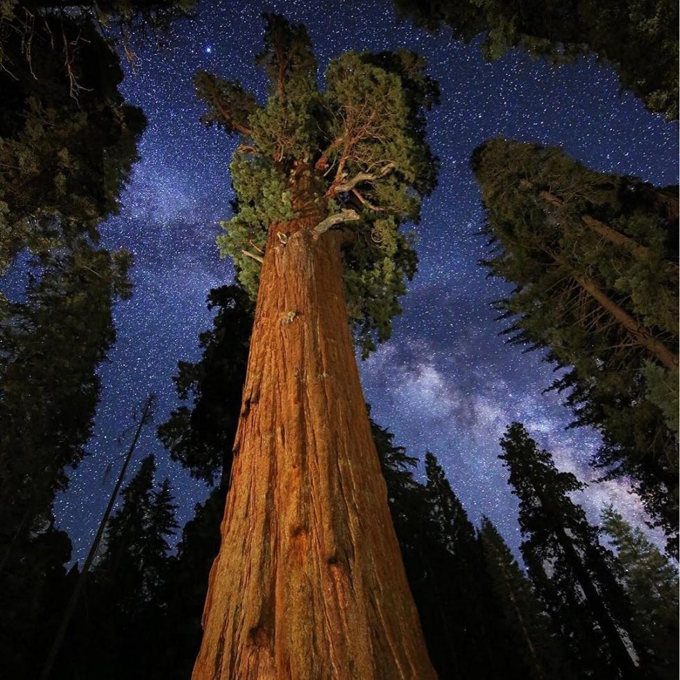 Royce Bair in Sequoia Nat'l...
